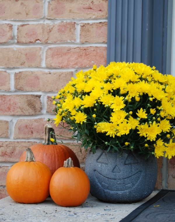 Turn a $1 plastic pumpkin bucket into an awesome stone-look planter with just some specialty spray paint! #31DaysofHalloween