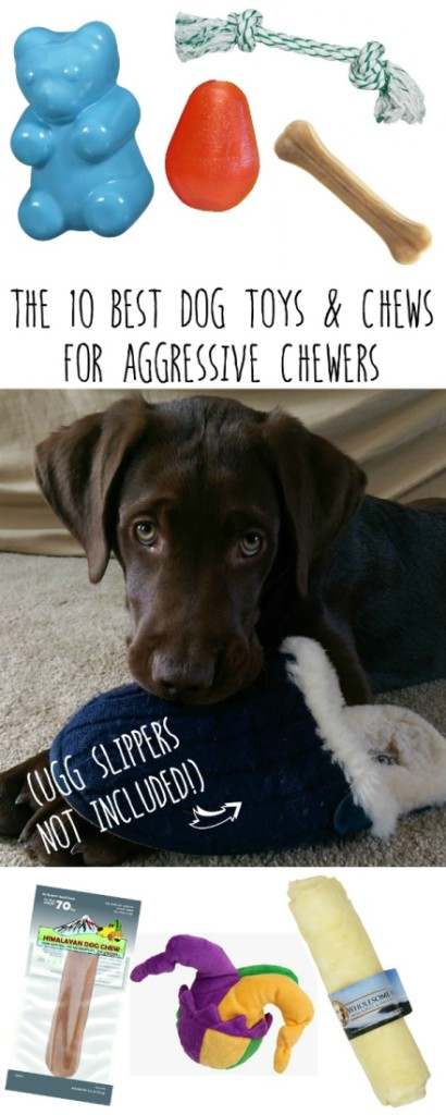 10 more amazing dog toys chews endlessly for Best plush dog toys for aggressive chewers