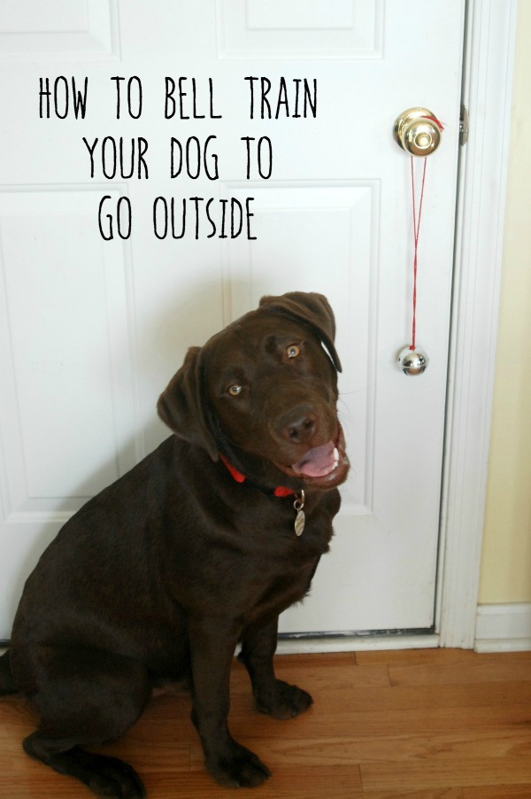 Use Nudges dog treats from @Walmart to teach your dog how to ring a bell to let you know when he has to go outside! #NudgeThemBack #ad