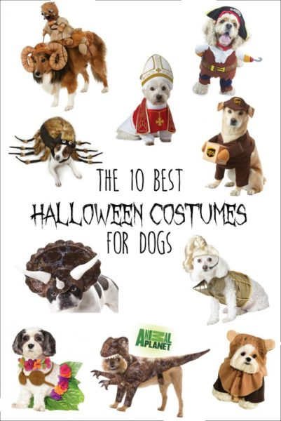 Dog Halloween costumes are my favorite. I can't take how hilarious some of these are!